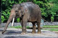1200px-Borobudur-Temple-Park Elephant-cage-01