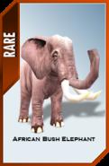 African Bush Elephant card ztag