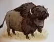 Bison usborne my first thousand words