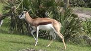 DAK Springbok