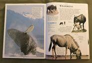 DK Encyclopedia Of Animals (167)