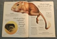 Desert Animals (Over 100 Questions and Answers to Things You Want to Know) (3)