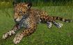 Jaguar, Brazilian (Planet Zoo)