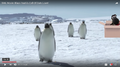 SML Penguins