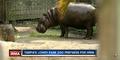 Tampa Lowry Park Zoo Hippo