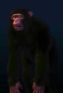 UTAUC Chimpanzee