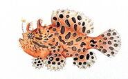 Frogfish (Animals)