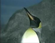 LPZ King Penguin