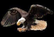 NatureRules1 Bald Eagle