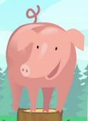 Pig mib