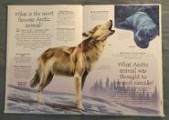 Polar Animals (Over 100 Questions and Answers to Things You Want to Know) (3)