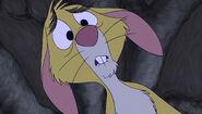 Shocked rabbit 4
