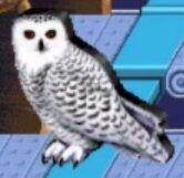 Snowy owl reader rabbit 1st grade
