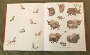 8- An Animal Alphabet (13)