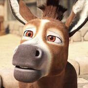 Bo the Donkey.jpg