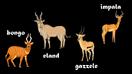 Bongo, Eland, Gazelle, and Impala