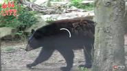 Columbus Zoo Black Bear