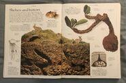 DK Encyclopedia Of Animals (16)