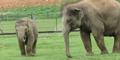 London Zoo Elephants