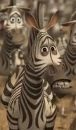 Madagascar 2 Grévy's Zebra