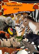 NR1 Madagascar Asia Poster
