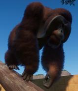 Orangutan, Bornean (Planet Zoo)