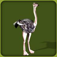 Ostrich (Blue Fang)