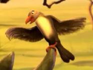 Oxpecker