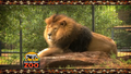 Rolling Hills Zoo Lion