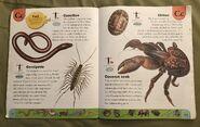 Weird Animals Dictionary (3)