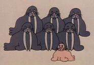 7-walruses-fmafafe