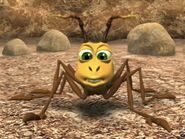 Ant jungle beat