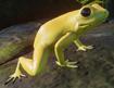 Frog, Golden Poison Dart (Planet Zoo)