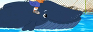 GDG Whale
