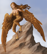Harpy what's old