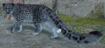 Leopard, Snow (Planet Zoo)