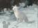 Little Einsteins Arctic Fox
