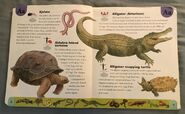 Reptiles and Amphibians Dictionary (1)