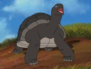 Rileys Adventures Aldabra Giant Tortoise