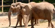 Seneca Park Zoo Elephants