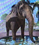 Sri Lankan Elephant ZTX