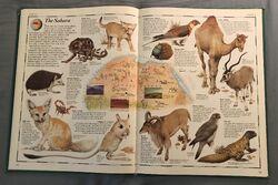 The Animal Atlas (14).jpeg