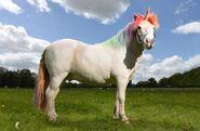 Unicorn (RL)