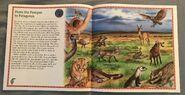 Animals of South America (9)