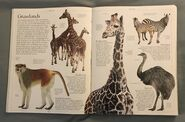 DK Encyclopedia Of Animals (24)