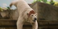 Doolitle 2020 Polar Bear