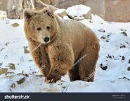 Himalayan Brown Bear (V2)