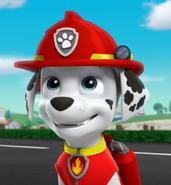 Marshall the Dalmatian