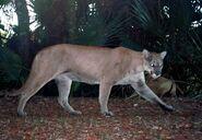 Panther remote camera