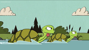 TLH Turtles